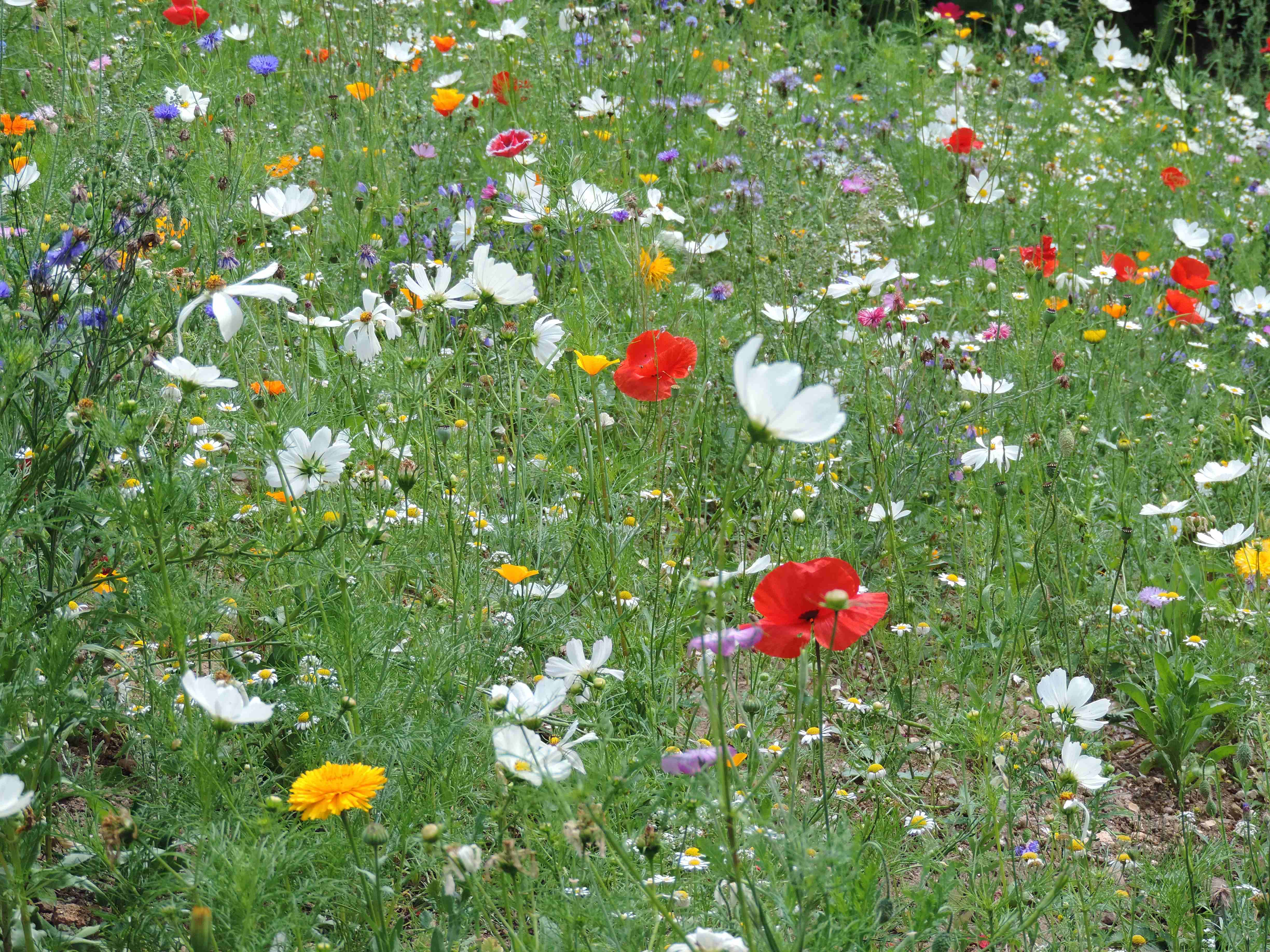 Wildflower Bank At The Car Park In Radford Park Liphook